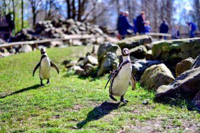 aqua-zoo-friesland-omgeving-chalet-v6-gestrand-makkum